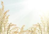 oat half frame isolated on light background