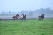 few galloping stallions on foggy pasture