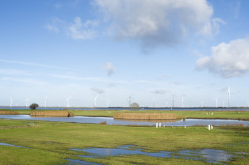 Pastures in The Netherlands by Spakenburg.