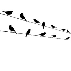 birds on barb wire - vector illustration
