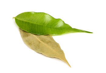 Fresh and dry bay leaf.