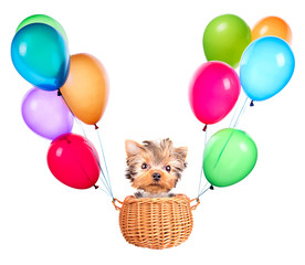 dog flying in a basket with air balloons