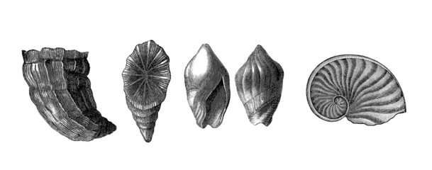 5 Prehistoric Fossils