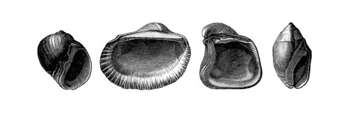 4 Prehistoric Fossils