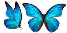 """Постер, картина, фотообои """"beautiful butterfly isolated on white"""""""