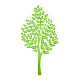 Green tree isolated on white for your design