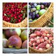 Cueillette de fruits