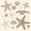Sea Starfish set. Hand drawn vector illustration. - 59121467