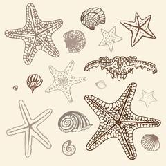 Sea Starfish set. Hand drawn vector illustration.