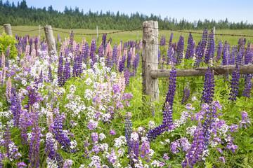 Springtime Farm Flowers