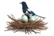 realistic 3d render of magpie with nest