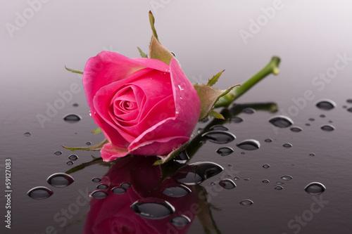 kwiat-rozy-z-refleksji-na-temat-ciemnej-powierzchni-martwa-natura