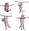 kittens with rope