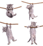 kittens with rope - Fine Art prints