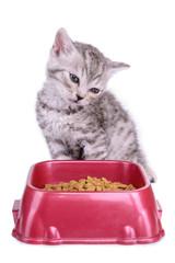 kitten eat diet food