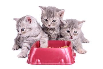 kittens eat diet food