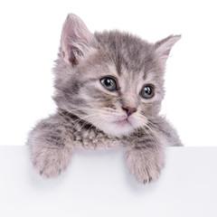 kitten holding billboard
