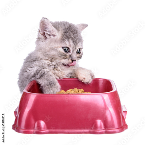 kitten eat diet food