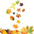 Falling beautiful autumn leaves isolated on white