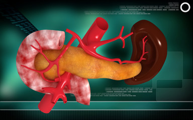 pancreas and spleen