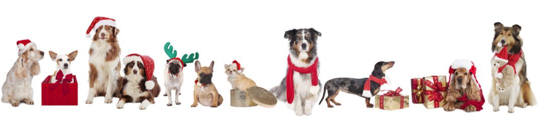 Weihnachtshunde nebeneinander - christmas dogs