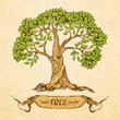 Obrazy na płótnie, fototapety, zdjęcia, fotoobrazy drukowane : Green tree with place for text