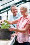 Fototapety Middle Aged Couple Working Together In Greenhouse