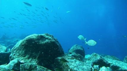 Shoal in atlantic ocean