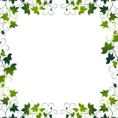 weinblatt,weinblätter,floral,frühling,rahmen,wein,vektor,