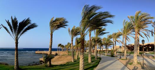 palmenweg mit wind panorama