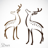 Vector image of an deer on white background