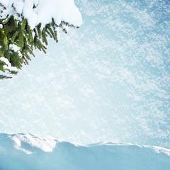 Fir tre in snowdrift