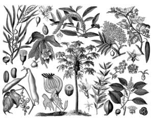 Plants - Botany