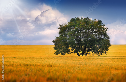 A lonely tree on a field