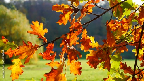 Autumn leafy tree in nature No.02
