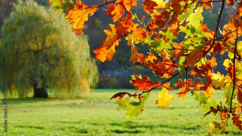 Autumn leafy tree in nature No.01