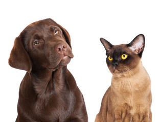 brown dog and cat portrait
