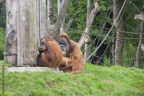 Expressive Orangutans at a Zoo