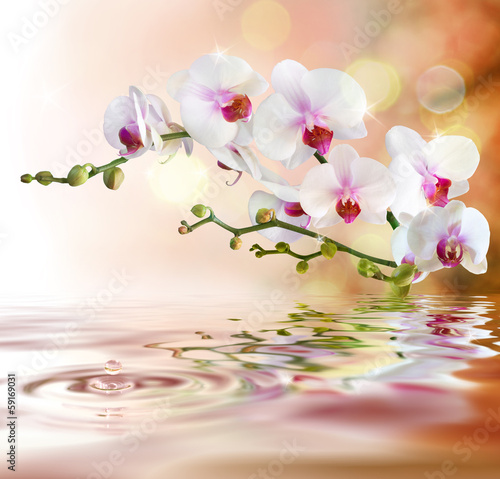 Wall mural white orchids on water with drop