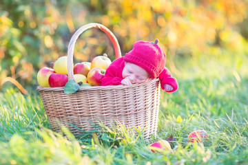 Adorable baby in a basket with apples in a sunny autumn garden