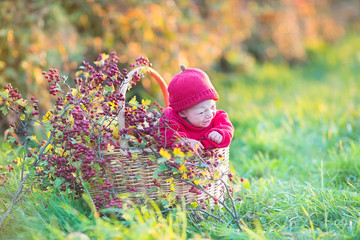 Cute newborn baby in a big basket with apples and red berry