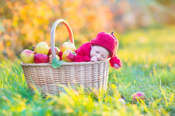 Newborn baby in a big basket with apples in an autumn garden on