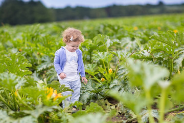Funny baby girl walking in a zucchini field on a farm on a warm