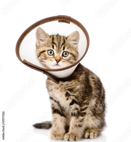 scottish kitten wearing a funnel collar. isolated on white