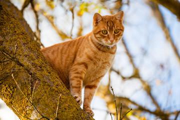 Il gatto è sull'albero