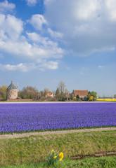 Blumenfeld bei Lisse nahe dem Keukenhof in Holland