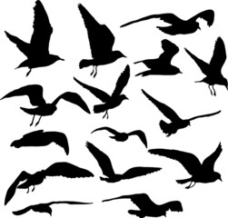 Vector set of silhouettes of 15 flying seagulls