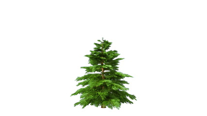 Growing rotating fir tree with alpha matte