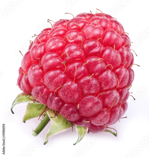 One rich raspberry fruit isolated on a white.