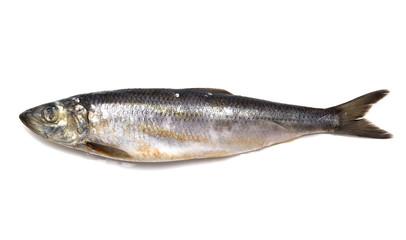 herring on white background